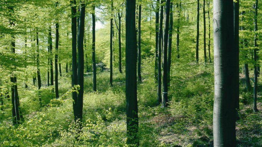 gdh-klimaschutz-1-laubwald-1